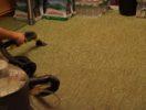 Химчистка ковров  фото 2