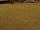 Химчистка ковров  фото 3