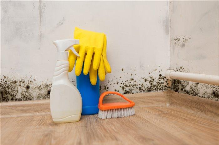 Как безопасно и недорого уничтожить плесень в доме фото 3