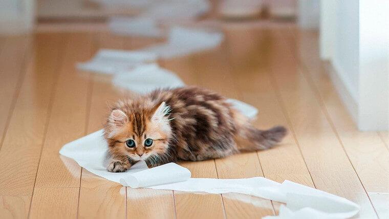 Як усунути запах котячої сечі в будинку? фото 10