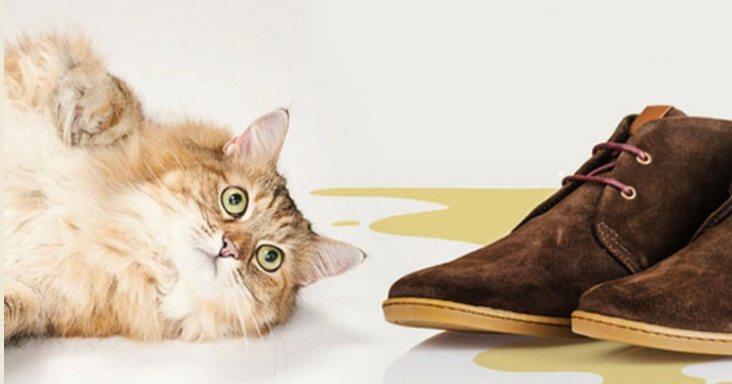 Як усунути запах котячої сечі в будинку? фото 11